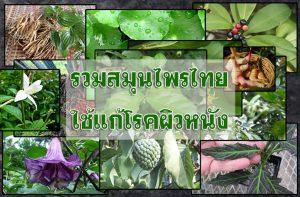 รวมสมุนไพรไทย-ใช้แก้โรคผิวหนัง