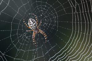 วิธีปฐมพยาบาล เมื่อโดน แมงมุมกัด ภัยร้ายใกล้ตัวที่คุณควรระวัง