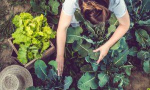 5 ผักพื้นบ้าน หากินง่าย ราคาถูก อุดมสารอาหารสูง ดีต่อสุขภาพเต็มๆ